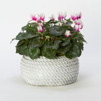 Coiled Rope Planter