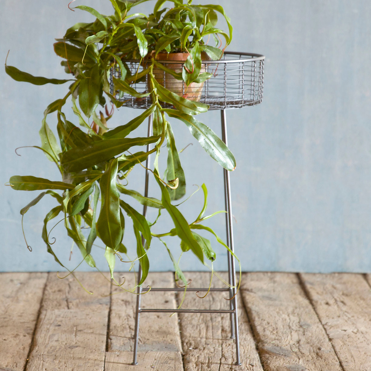 Round Basket Plant Stand Large Terrain