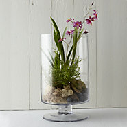Footed Cylinder Terrarium, Large