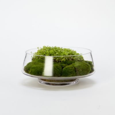 Footed Dish Terrarium