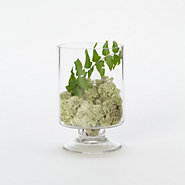 Footed Cylinder Terrarium
