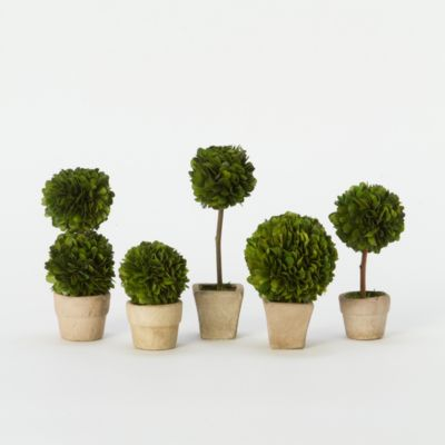 Preserved Boxwood Mini Topiary Set