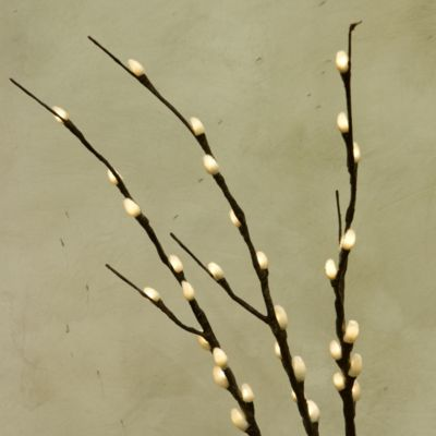 Illuminated Willow Branches