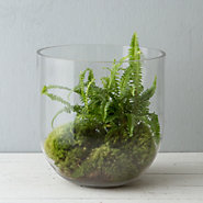 Egg Base Terrarium