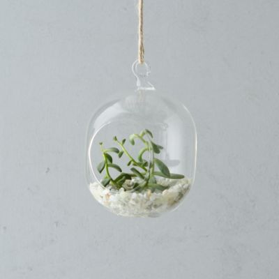 Hanging Oval Terrarium, Small