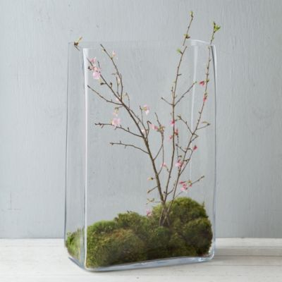 Rippled Glass Terrarium