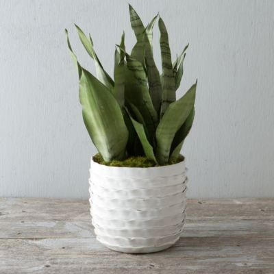 Ceramic Ruffle Pot
