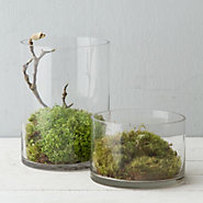 Sliced Cylinder Terrarium, Tall
