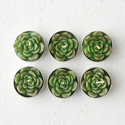 Succulent Tea Lights, Low