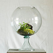Footed Fishbowl Terrarium