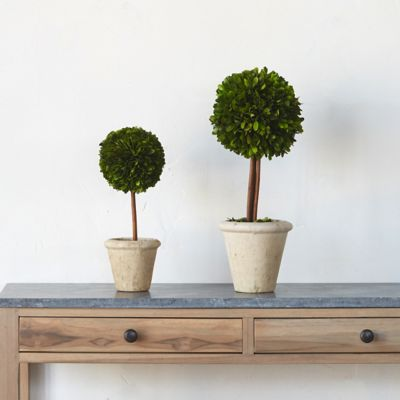 Preserved Boxwood Sphere Topiary