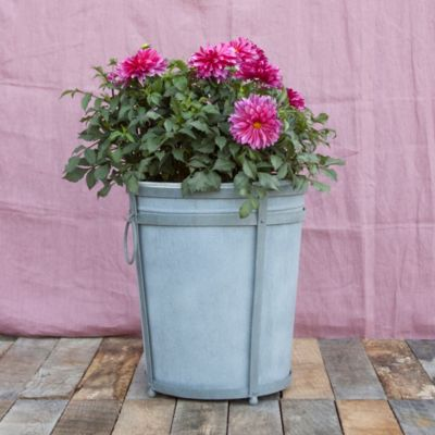 Framed Zinc Bucket Planter