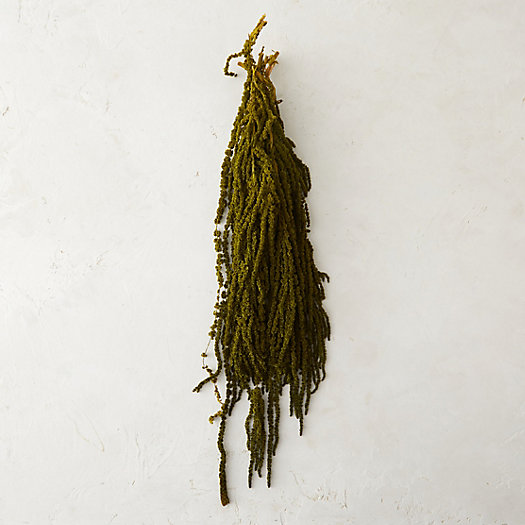 Preserved Hanging Amaranth Bunch