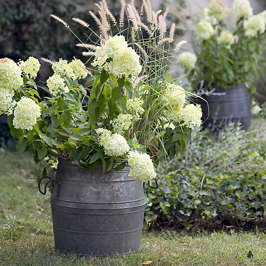 Galvanized Barrel Planter