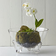 Folded Leg Bowl Terrarium