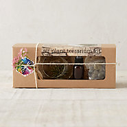 Hanging Tillandsia Grow Kit
