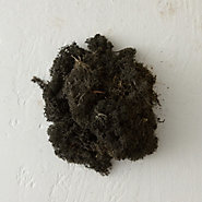 Preserved Reindeer Moss, Small