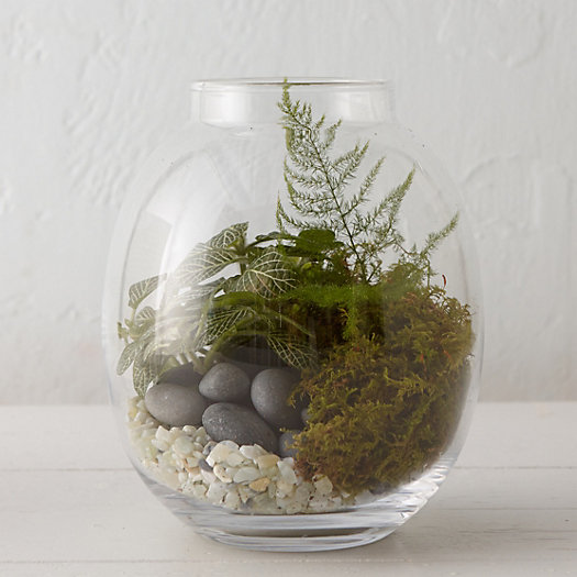 Wide Mouth Jar Terrarium