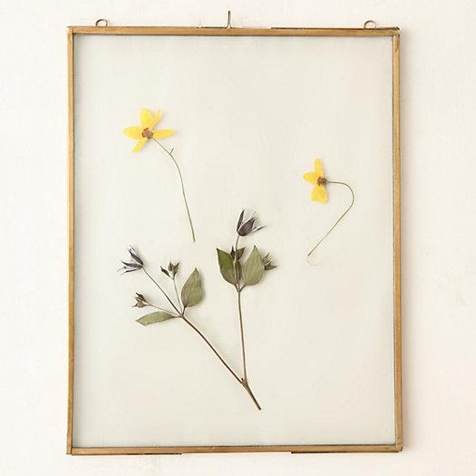 brass specimen frame extra large