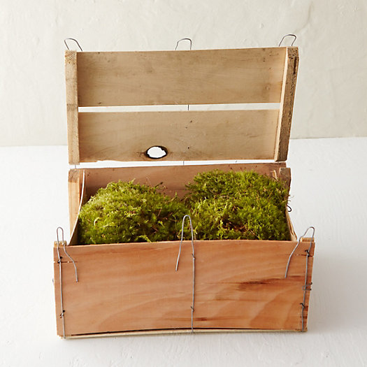 Fresh Clump Moss Crate