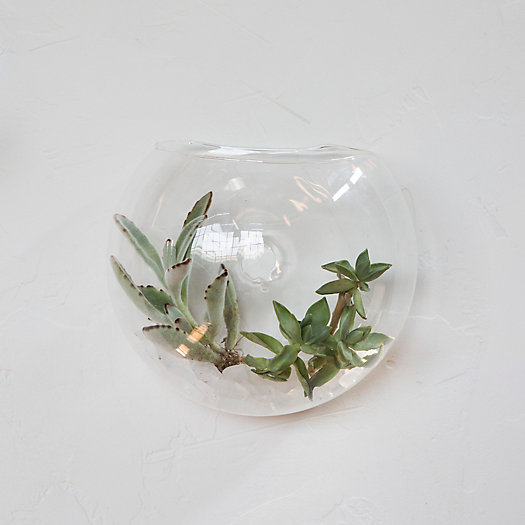 Wall Mounted Drop Terrarium
