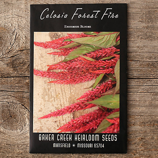 'Forest Fire' Celosia Seeds