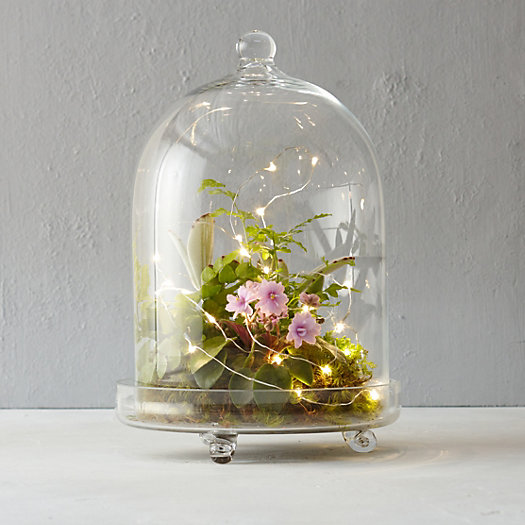 Light Cloche Terrarium