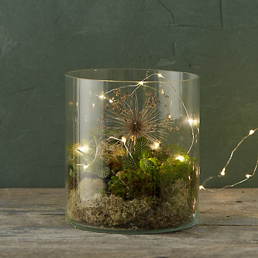 Skyward Terrarium
