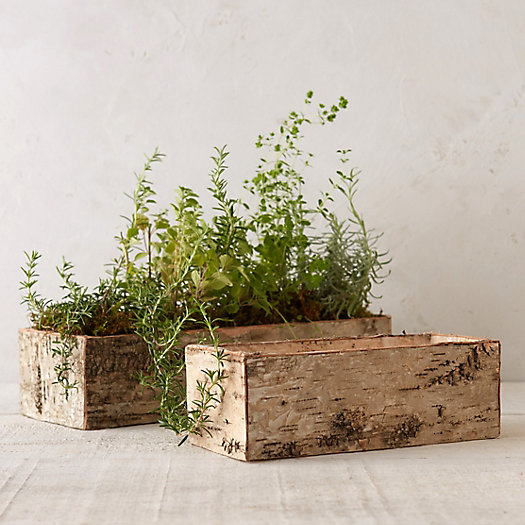 Birch Bark Trough Planter
