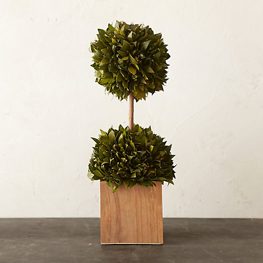 Preserved Boxwood Double Topiary, Small