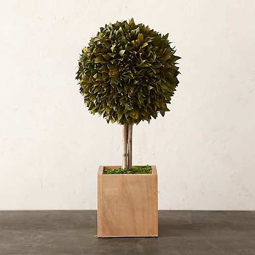 Preserved Boxwood Single Topiary