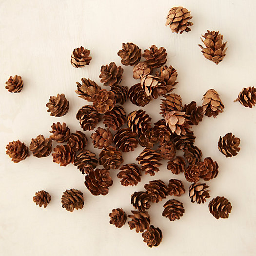 Mini Hemlock Pinecones