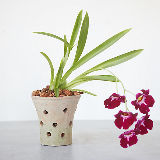 Earth Fired Clay Orchid Pot
