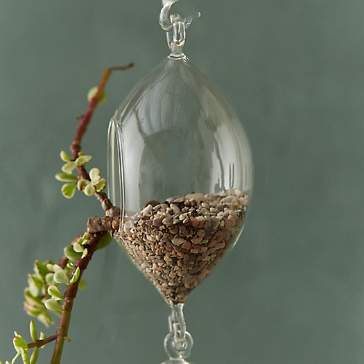 Linked Oval Hanging Terrarium