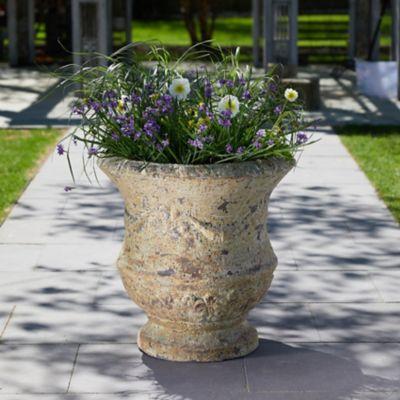Barnacle Thistle Urn