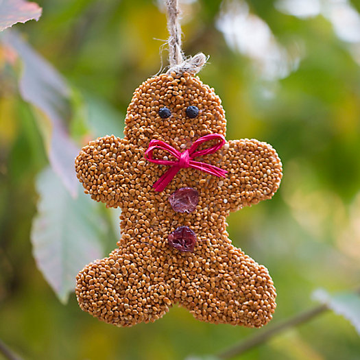 Edible Seed Gingerbread Man