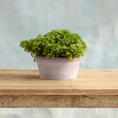 Købenler Scallop Bowl