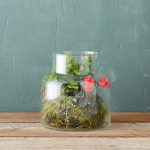 Taper Top Jar Terrarium