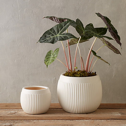 Clay Stripe Bowl