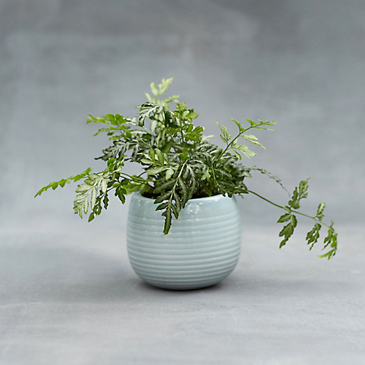 Clay Stripe Mini Sphere Planter
