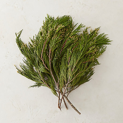 Fresh Incense Cedar