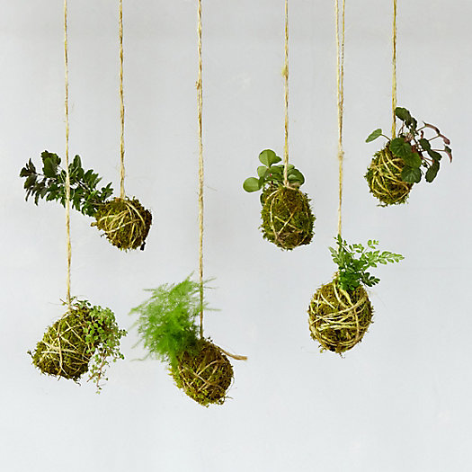 Miniature String Garden, Set of 6