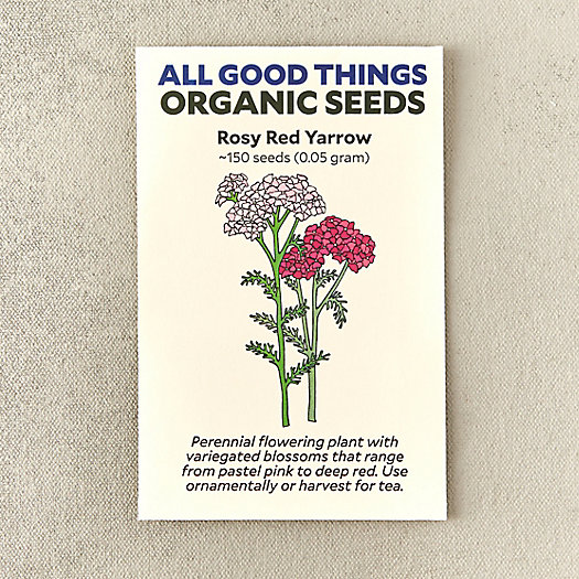 Organic Rosy Red Yarrow Seeds
