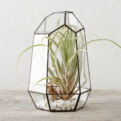 worksheet Terarium terrariums terrarium supplies terrain framed hexagon terrarium