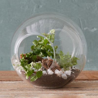 worksheet Terarium terrariums terrarium supplies terrain open globe terrarium