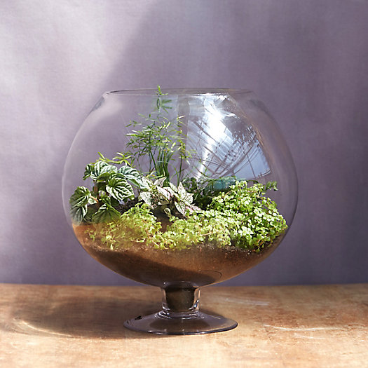 Chalice Footed Terrarium