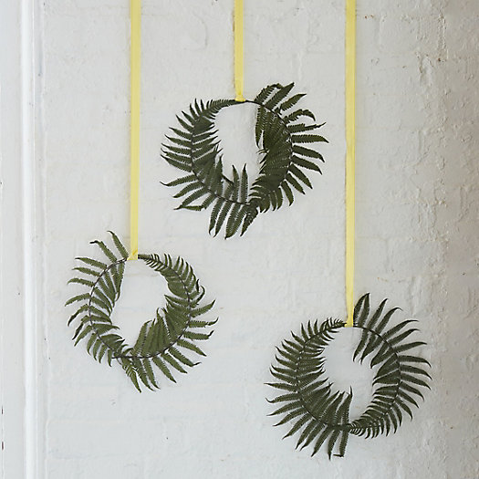 Preserved Fern Circlet Trio, Parchment