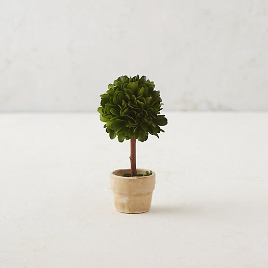 Preserved Boxwood Mini Single Topiary