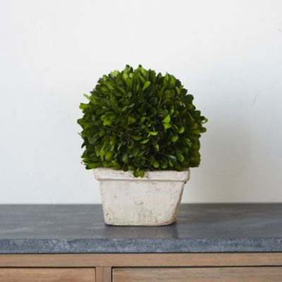 Preserved Boxwood Topiary, Square Pot