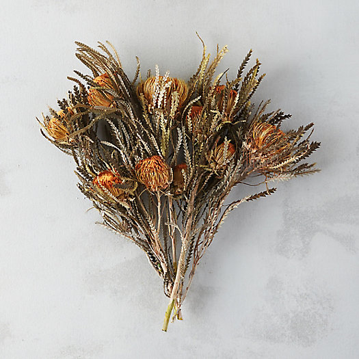 Preserved Orange Banksia Bunch